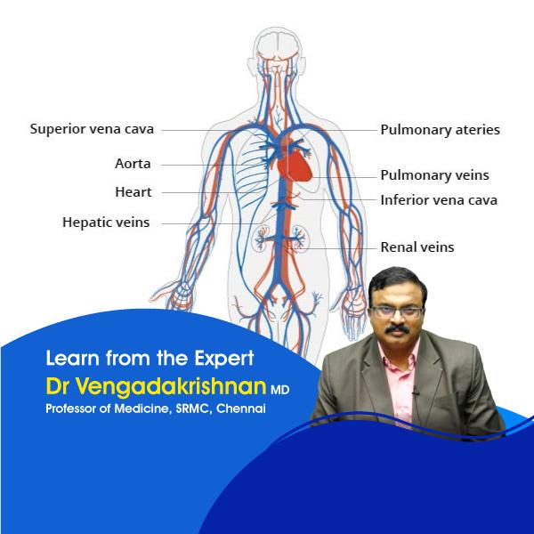 General-Medicine-Cardiovascular-System